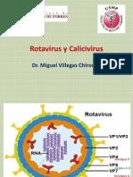 Rotavirus, Calicivirus, Herpesvirus y Ébola.
