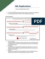 DNA Replication and Repair