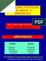 DR. VELA-ARAÑAS Y OFIDEOS.ppsx