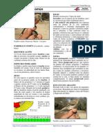 pardillo común.pdf