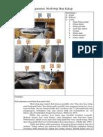 Data Pengamatan Morfologi Ikan Kakap
