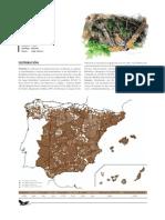 abubilla.pdf