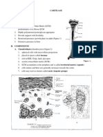 Cartilage Lecture Notes