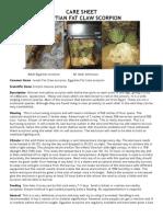 palmatus care sheet 2
