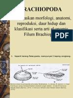 (9) Brachiopoda
