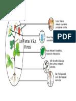 Mapa Conceptual Las Plantas y Sus Partes