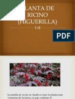 Planta de Ricino (Higuerilla)