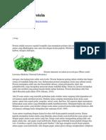 Kelarutan Protein