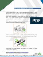 sensores-de-posicion-de-angulo-de-la-direccion.pdf