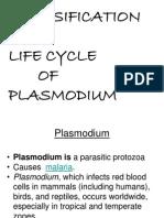 Life Cycle Plasmodium