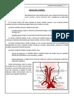 Trabajo de Neuroanatomía