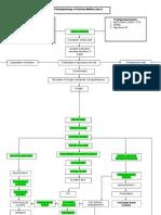 Pathophysiology of Diabetes Mellitus Type 2 Ver 1