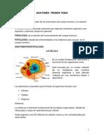 Anatomía básica del cuerpo