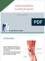 08. Tendinitis de La Pata de Ganso PRV
