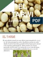 Tarwi CEREALES