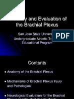 Brachial Plexus Powerpoint