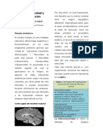articulo neuroplasticidad y rehabilitacion
