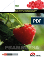 Estudio de Factibilidad Inversion Frambuesa