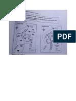 IELTS MAP2