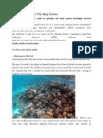 Ocean Acidification This Way Comes
