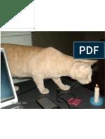 [photo] curiosity burned the cat