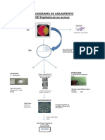 Flujograma de Aislamiento Staphylococcus Aureus