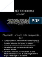 anatomadelsistema2-100827212832-phpapp01.ppt
