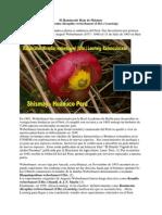 El Ranunculo Rojo de Shismay (Ranunculus (Krapfia) Weberbaueri (Ulbr.) Lourteig),