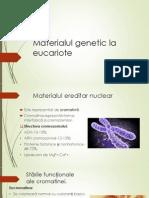 Eucariote