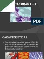 BACTERIAS GRAM ( + )