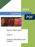 Cañihua