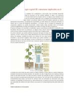 Anatomía y Fisiología Vegetal III