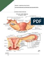 Menstruasi Tak Teratur skenario 3