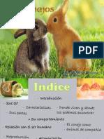 Conejos Imprimir