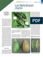 plagas del palto.pdf