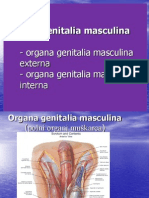 Muski Polni Organi 2