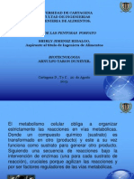 Pentosas Fosfato Bio