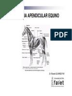 Miologia Apendicular Equino UST