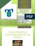 Descripcion de Las Caracteristicas Morfologicas y Estructurales de Los Hongos