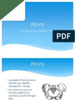 Clase Pelvis