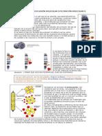 Bioquimica 11 Cromatografia de Exclusión Molecular