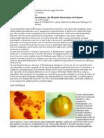 Mancha Bacterial en Tomate