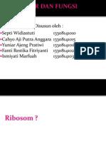 Struktur Dan Fungsi Ribosom