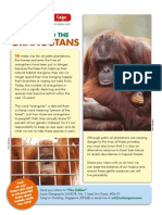 Palm Oil and the Orangutans