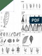 Trial Leaf