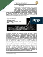 PLIEGUES - Traducción Final