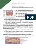 Anatopato - Cardio