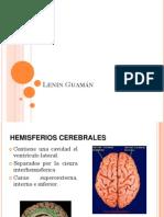 Anatomia rad hemisferios