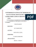 INVESTIGACION Nº1 estructuras y elementos patológicos en sedimento urinario patológico.docx