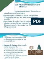 Unidad VII, Estructura de Las Plantas